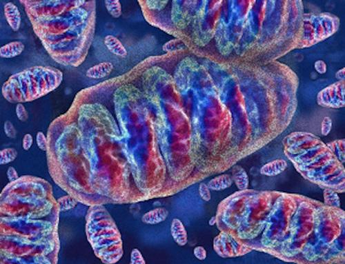Sirtuine, mitocondri e Anti aging