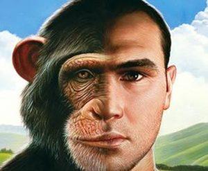 dieta e Homo sapiens